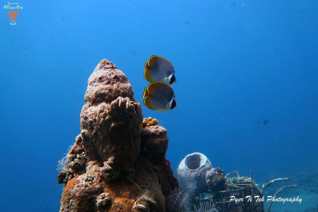 Spot plongée bali - les meilleurs endroits