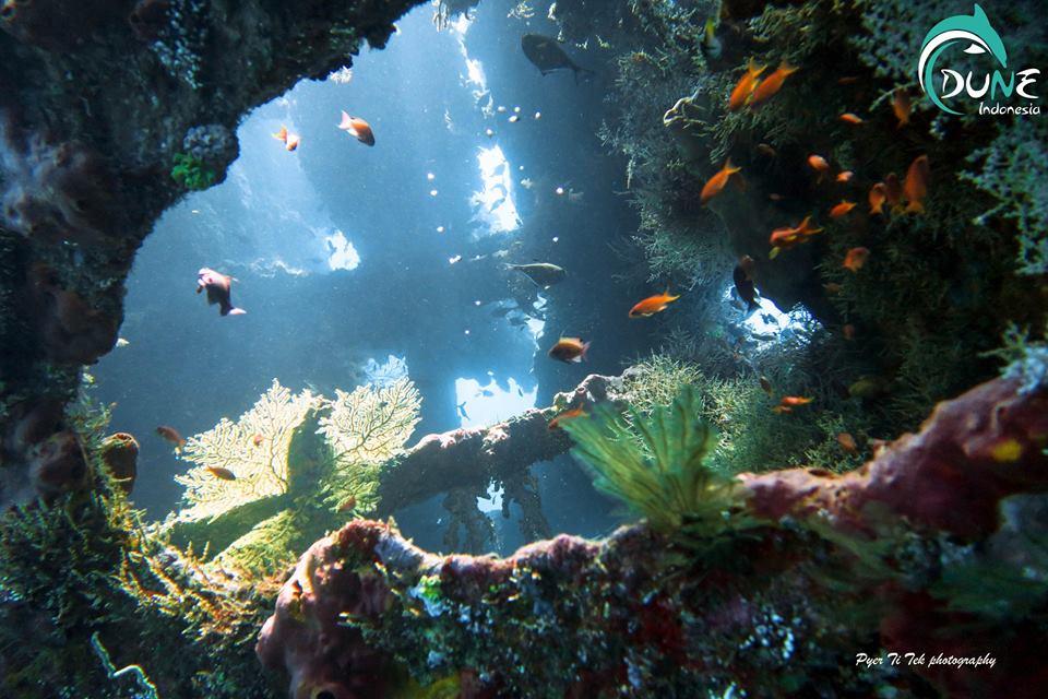 Un site exceptionnel pour un loisir particulier : Tulamben Plongée