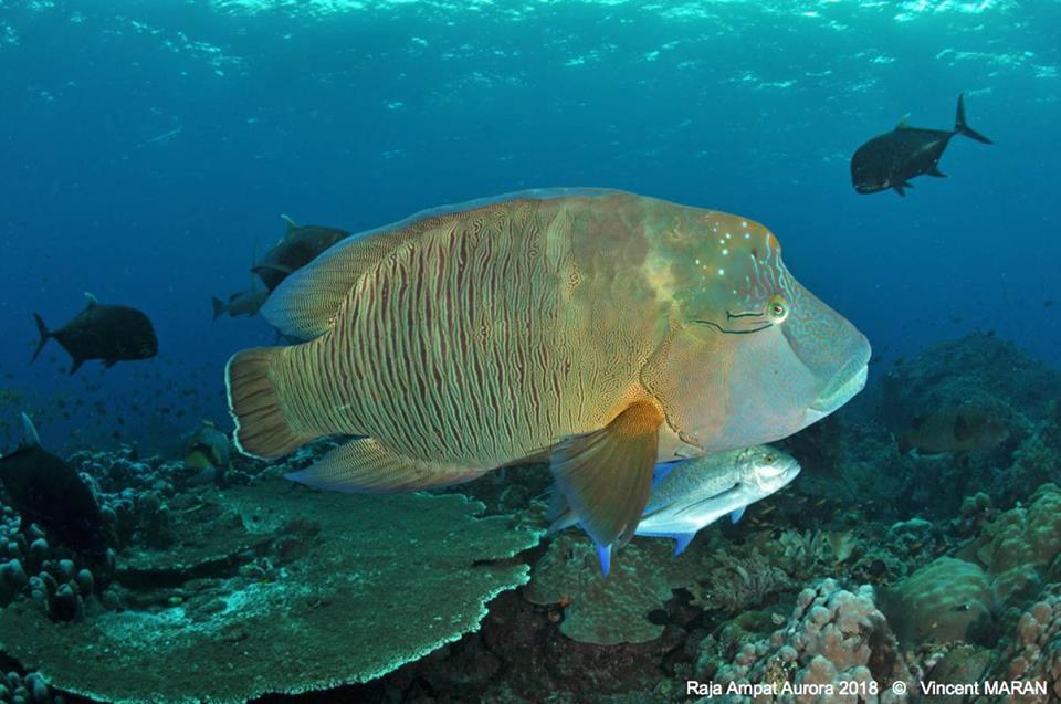 Les meilleurs sites de Bali plongée sous-marine