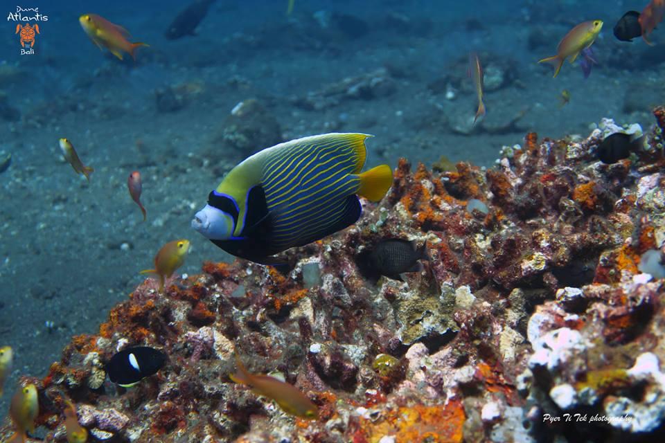 Informations pratiques sur la Plongée Bali