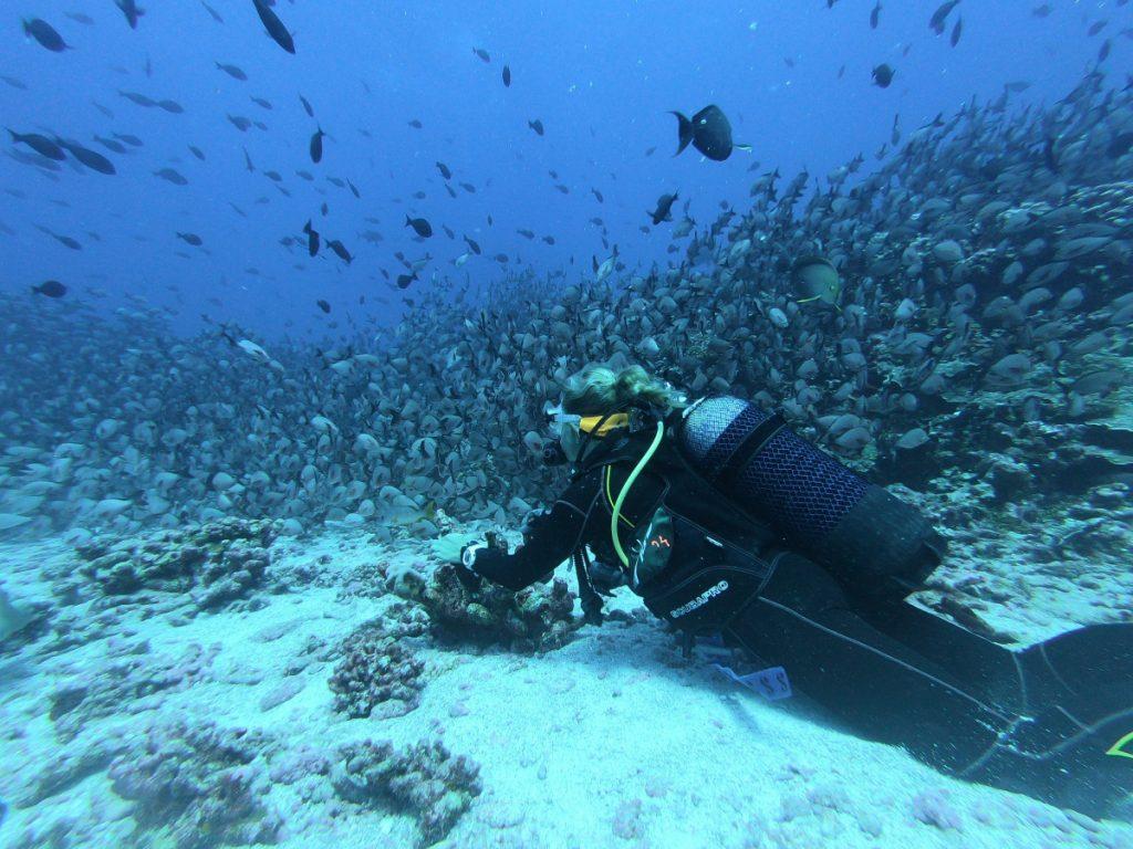 Open water bali : la formation qu'il vous faut pour faire de la plongée sous-marine