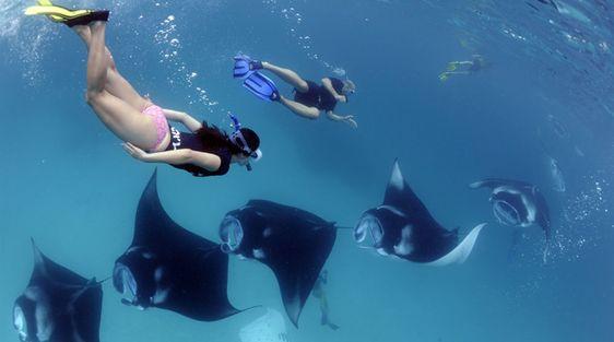 Bali plongée : à la recherche des gros animaux