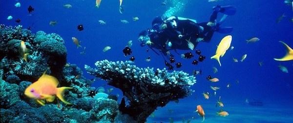 Safari Bali Plongée