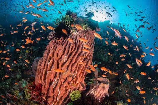 Spot Plongée Bali