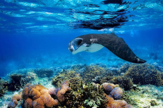 site de plongée Bali